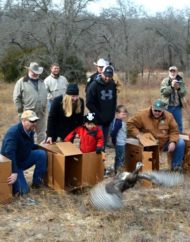 Super stocking of 240 Eastern wild turkeys launched in 2014