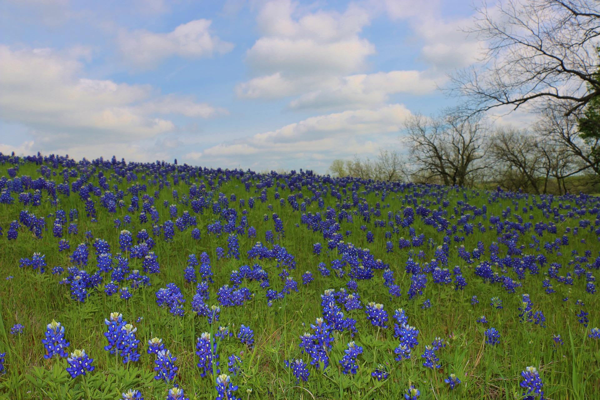 Editorial: I Love Texas
