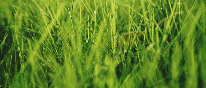 Identifying and Dealing with Lawn Insects
