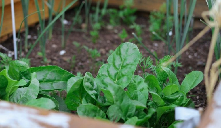Cover Crops for Home Gardens and Fields