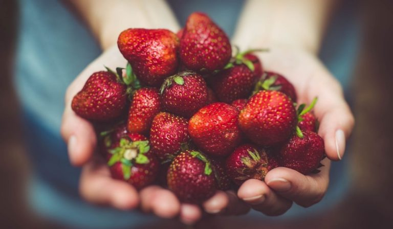 Growing Strawberries at Home