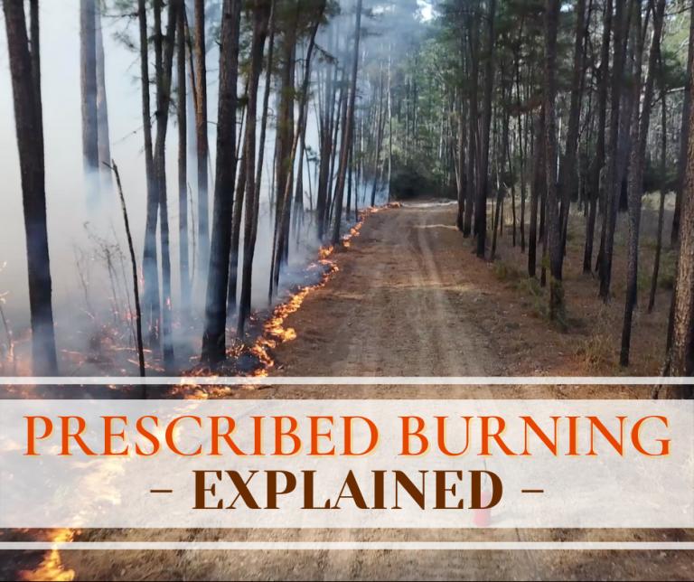 Prescribed Burning – Explained
