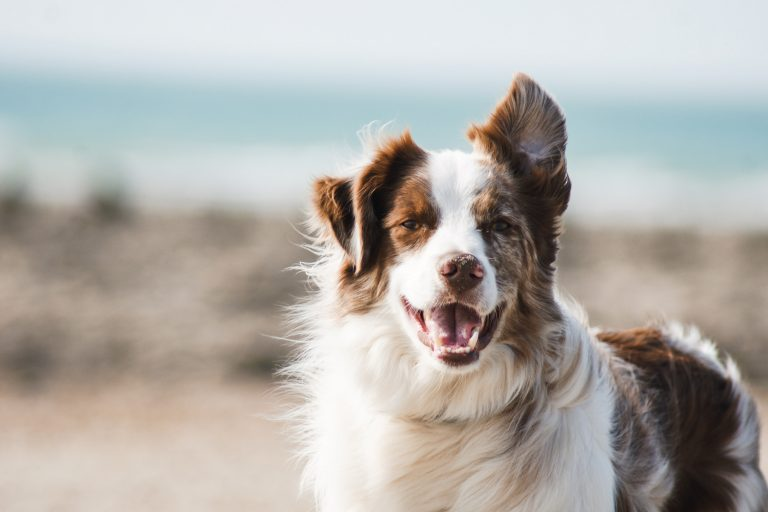 Summer Safety Tips for Your Pet