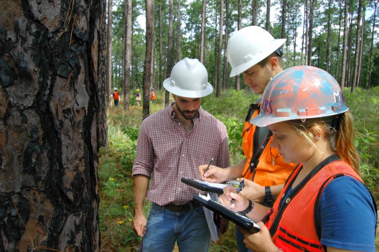 SFA's forestry program receives top ranking